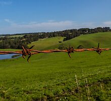 Barbed Wire fence, Lavers Hill, Victoria by davebanenphoto