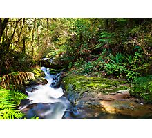 Rainforest floor at Triplet Falls, Great Otway National Park Photographic Print