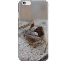 White Jumping Spider (Salticidae) iPhone Case/Skin