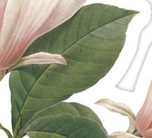 Vintage botanical art, elegant  magnolia flower. Sticker