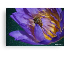 Bee and Water Lilly Award Winning Photo Canvas Print