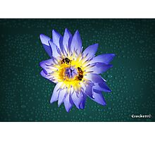 Bees and Water Lilly Award Winning Photo Photographic Print