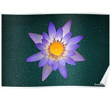 Water Lily Purple and Yellow Pastel Colors Natural Poster