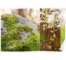 Moss rock and wild flower, Sinclair's Gully, Norton Summit, Adelaide Hills Poster