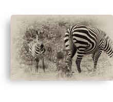 Zebra Foal Canvas Print