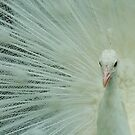 White Peacock by mindy23