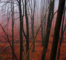 The Red Forest by PatiDesigns