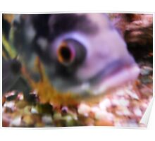 Colours Fish Poster