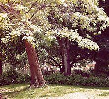 Sombra, bajo los árboles....... by cieloverde