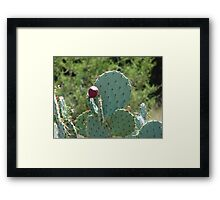 """Catcus"" by Carter L. Shepard Framed Print"