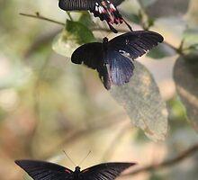 Butterfly LOVE by AroundOurWorld
