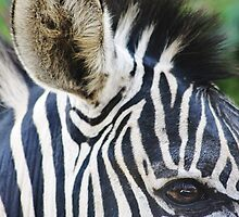 Zebras Eye by AroundOurWorld