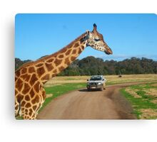 Safari Canvas Print