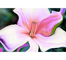 Daylily Gone Wild! Photographic Print