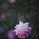 Lone Beauty - Purple Flower Photograph by Kameron Walsh