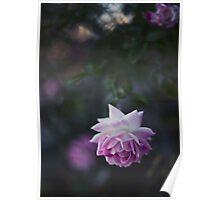 Lone Beauty - Purple Flower Photograph Poster