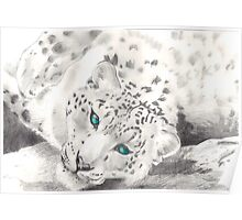Snow Leopard Graphite art Poster