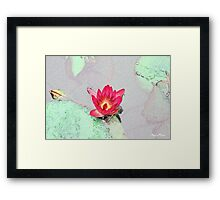 Botanical art, art style pretty pink waterlily flower Framed Print