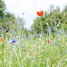 Meadow Medley V by Circe Lucas