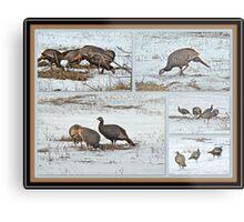 Wild Turkeys - Meleagris gallopavo Metal Print