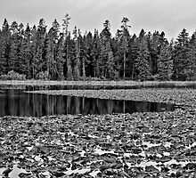Moose Lake Widerness II by Brenton Cooper