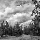 Edge of the Winegar Hole Wilderness I by Brenton Cooper