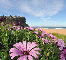 Beach blossom, Sydney, Australia by mappy1