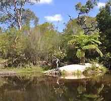 Bush oasis, Sydney, Australia by mappy1