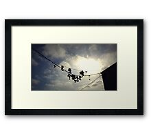 Hanging By A Shoelace  Framed Print
