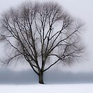 About a Tree by vertigoimages