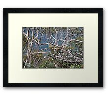 Australiana No. 2 Framed Print