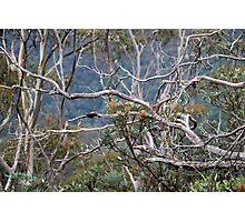 Australiana No. 2 Photographic Print