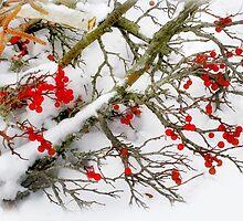 Winter's Paintbrush by Nadya Johnson