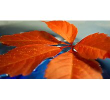 calm leaf on water Photographic Print