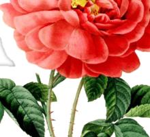 Vintage botanical art, red rose flower. Sticker