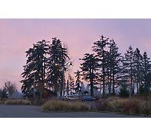 dog park at dusk Photographic Print