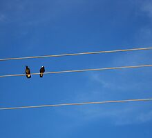 Bird on the wire by SnaphappyEm