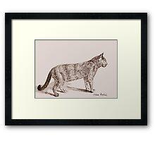 Retro Cat Sketch (Old Nostalgic Book Style) Framed Print
