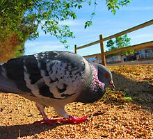 Feathered Friend The Pigeon by Michelle McCullough