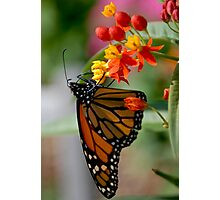 Butterfly 13 Photographic Print