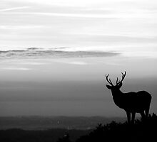 lone stag in black and white by shootingnelly