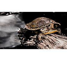 Reptilian Photographic Print