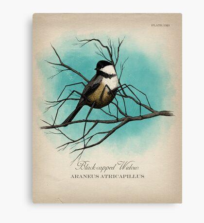 Black-capped Widow Canvas Print