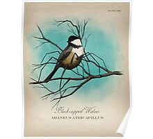 Black-capped Widow Poster