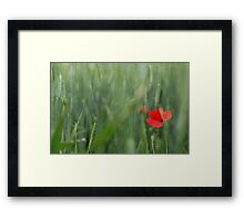 Poppy, Southern France Framed Print