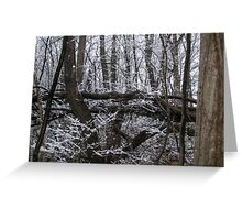 Contrast of White Snow Against the Dark Trees Greeting Card