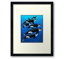San Antonio Orcas Framed Print
