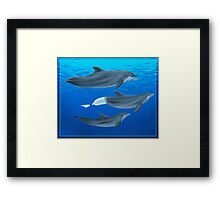 The Clearwater Dolphins Framed Print