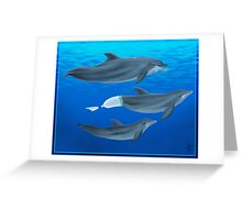 The Clearwater Dolphins Greeting Card