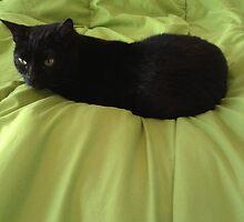 Kitty by annnna47